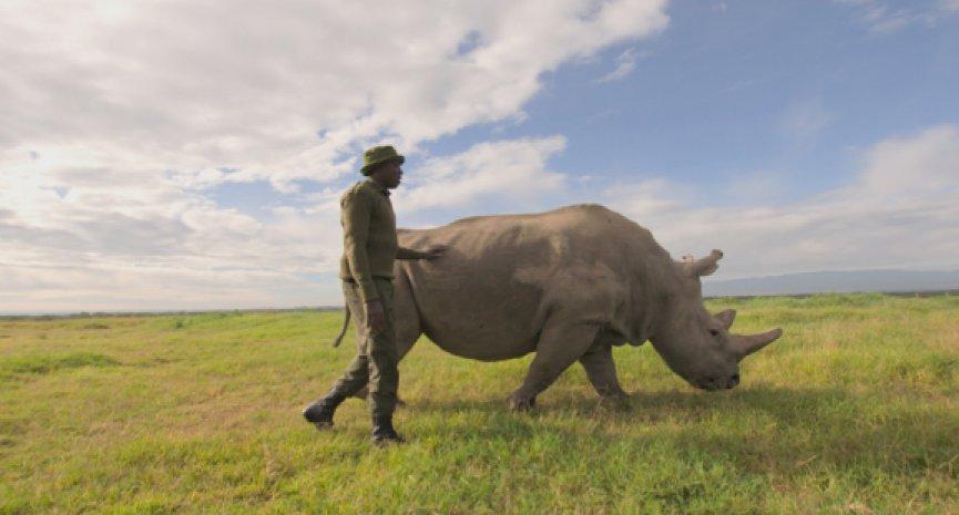 BBC Earth《地球生態季》掀起現代綠色革命!《滅絕的真相》揭100萬瀕危物種