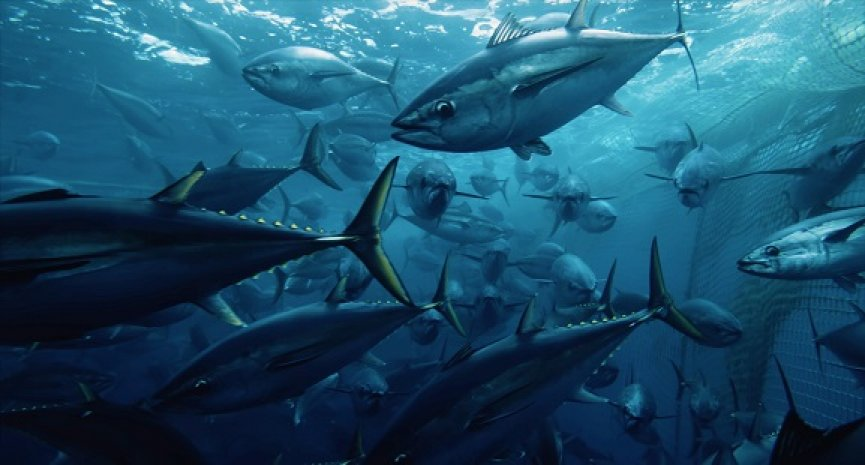 2048年海洋將沒有魚類?Netflix《海洋陰謀》成年度必看紀錄片