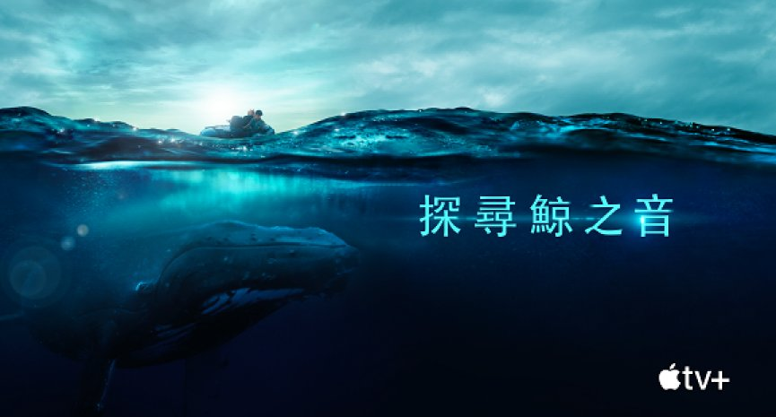 賞鯨季開跑!Apple TV+紀錄片《探尋鯨之音》帶你聽見鯨魚歌唱