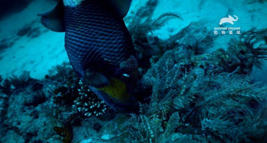 探索無奇不有的海洋生態!《世界海洋日特輯:科莫多水世界》精彩鉅獻