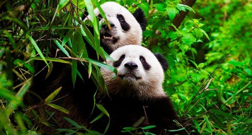 BBC《動物求偶記》橫跨6大洲!跟拍9000小時揭露牠們為愛詭計百出