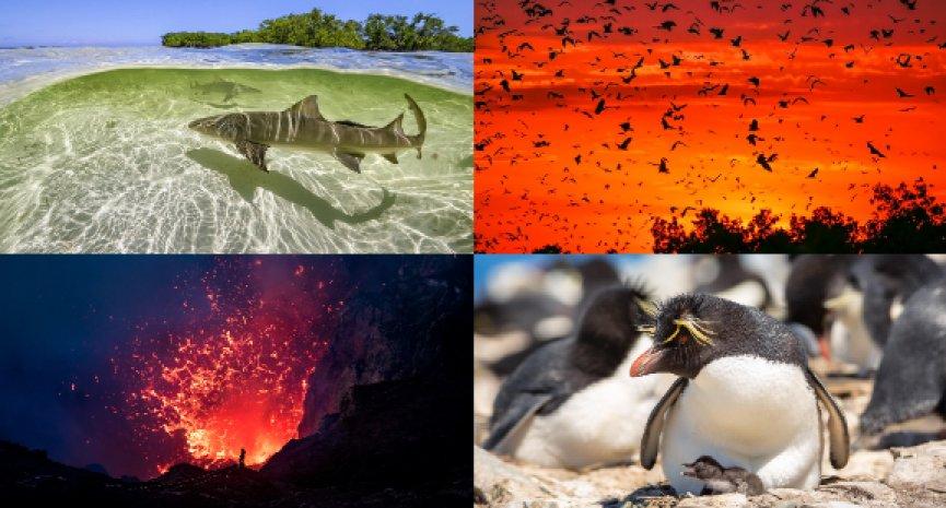 BBC《完美星球》見證地球自然力量!10道問答解密幕後故事